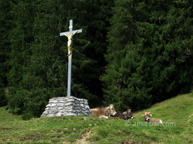 Cows under a Christ sculpture in the mountains around Amden, Switzerland