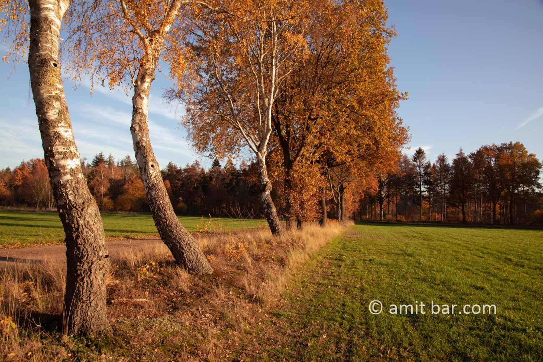 Autumn colors II: Autumn colors in the Achterhoek region, The Netherlands