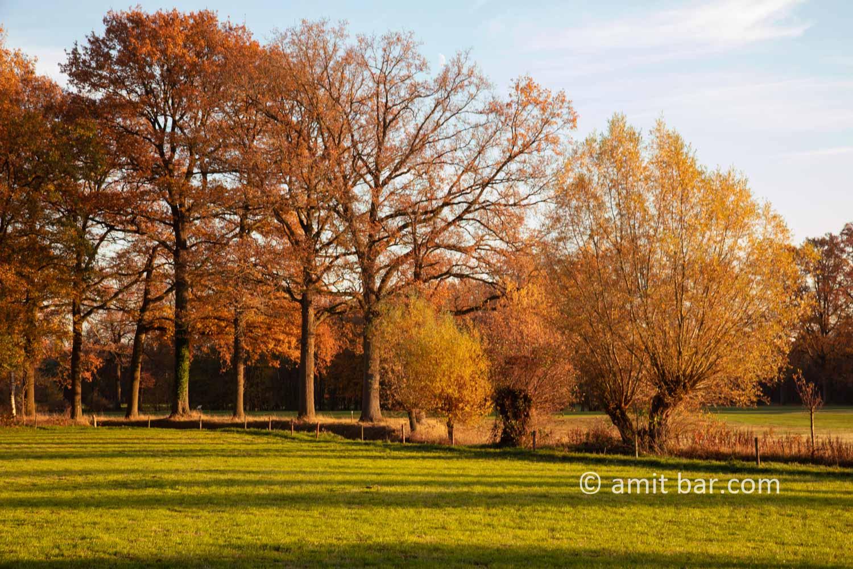 Autumn colors III: Autumn colors in the Achterhoek region, The Netherlands