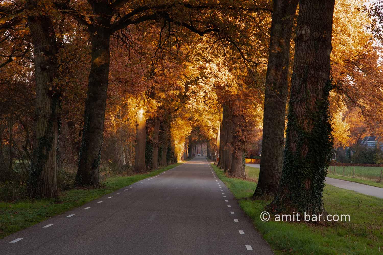 Autumn colors IV: Autumn colors in the Achterhoek region, The Netherlands
