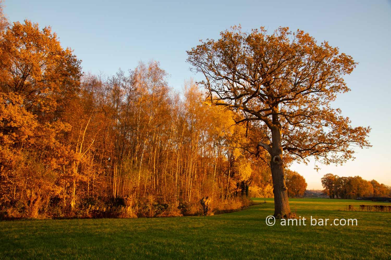Autumn colors V: Autumn colors in the Achterhoek region, The Netherlands