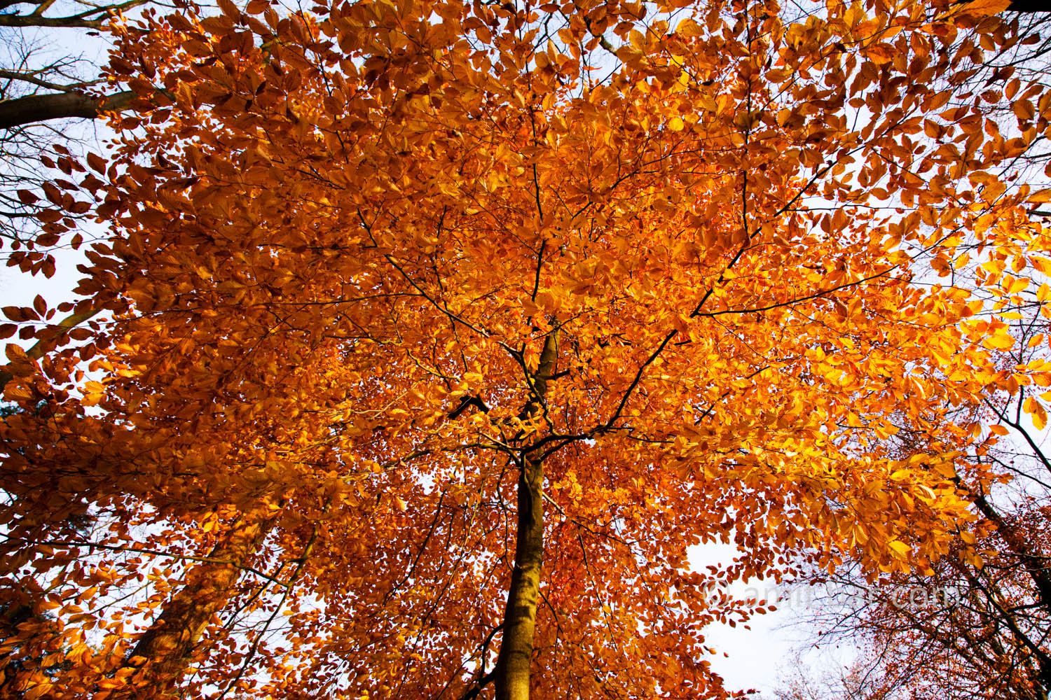 Autumn leaves XI: Automn leaves in De Achterhoek, The Netherlands