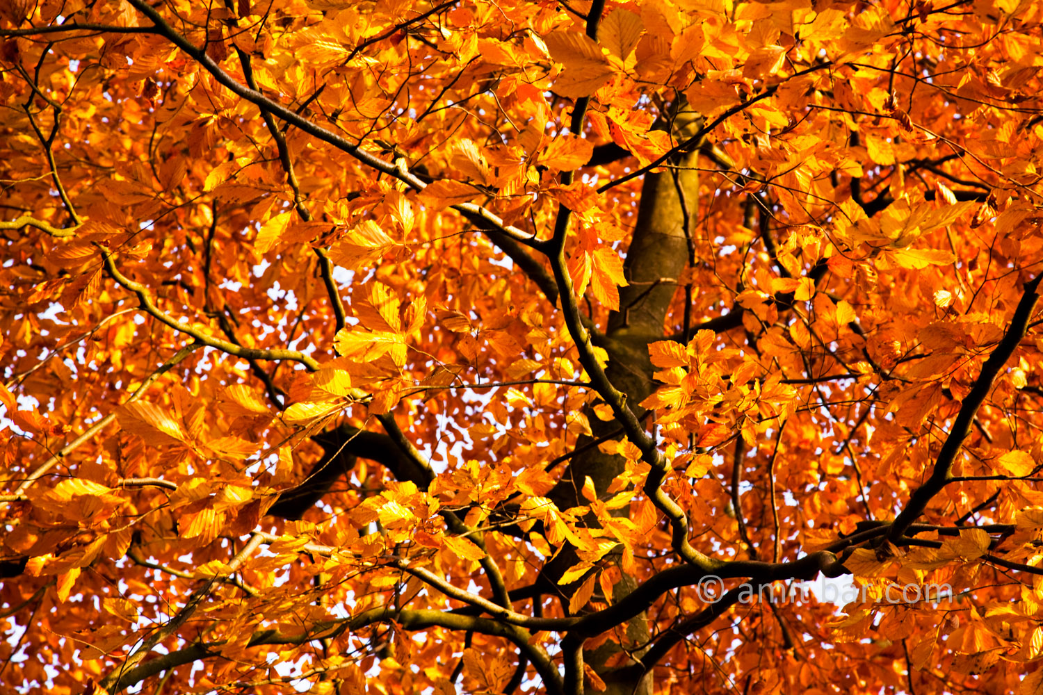 Autumn leaves XII: Automn leaves in De Achterhoek, The Netherlands