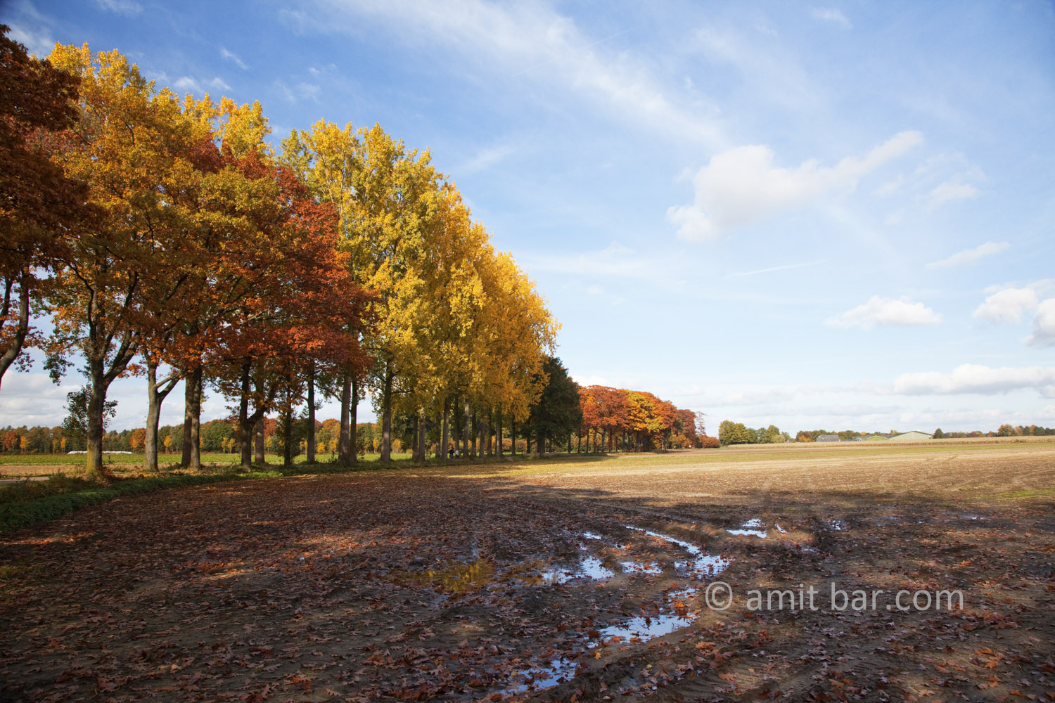 Autumn trees I: Autumn in De Achterhoek, The Netherlands