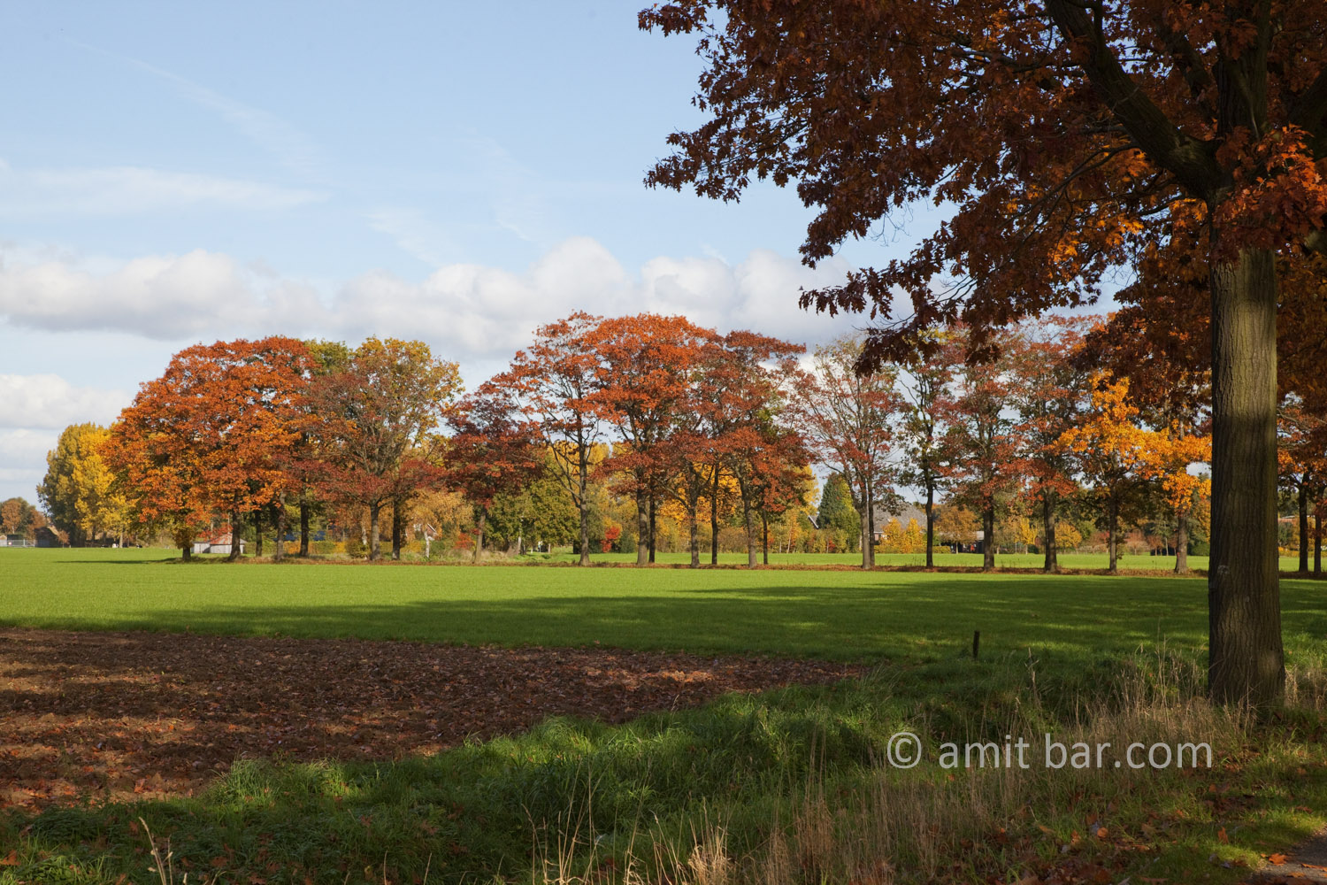 Autumn trees II: Autumn in De Achterhoek, The Netherlands
