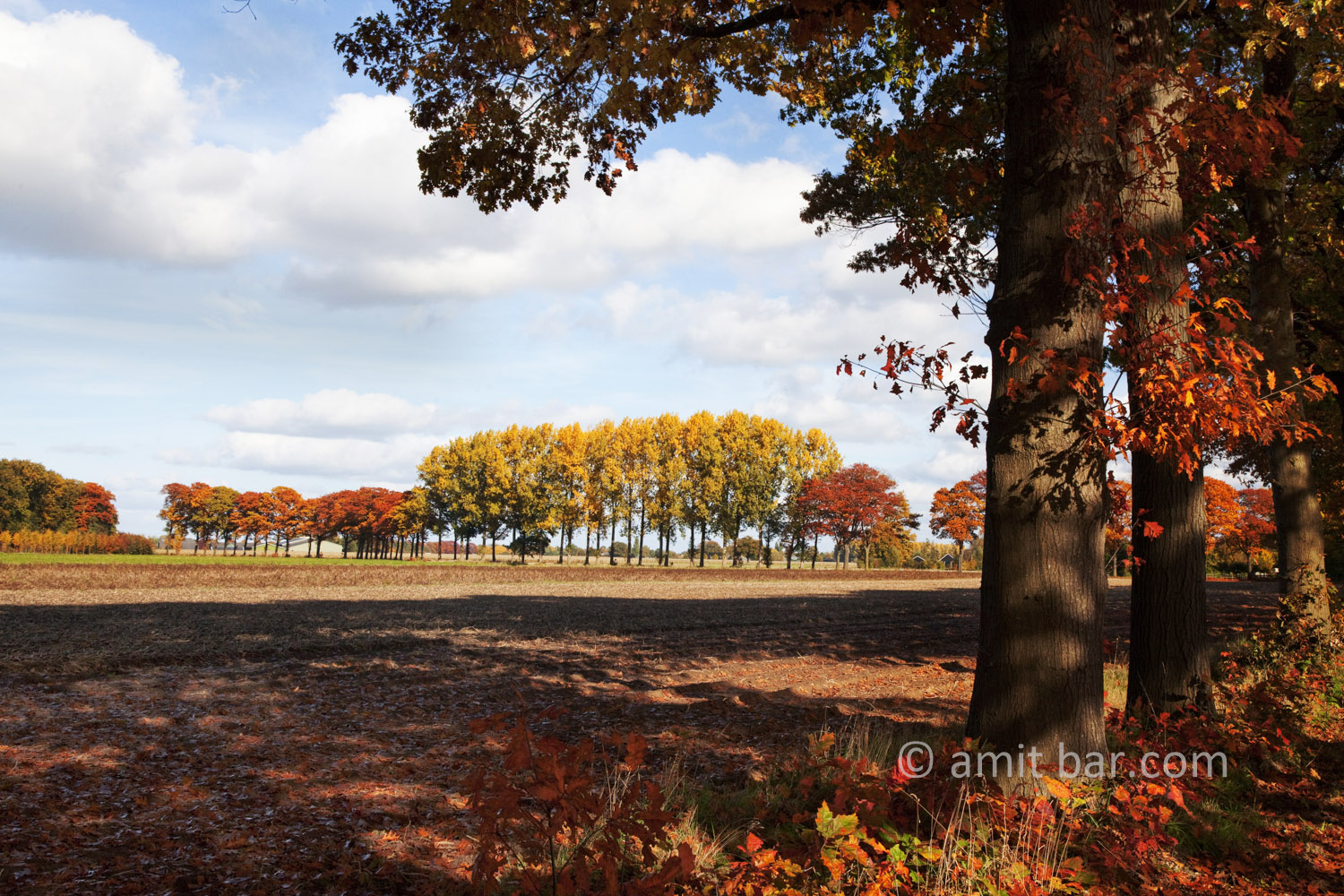 Autumn trees III: Autumn in De Achterhoek, The Netherlands