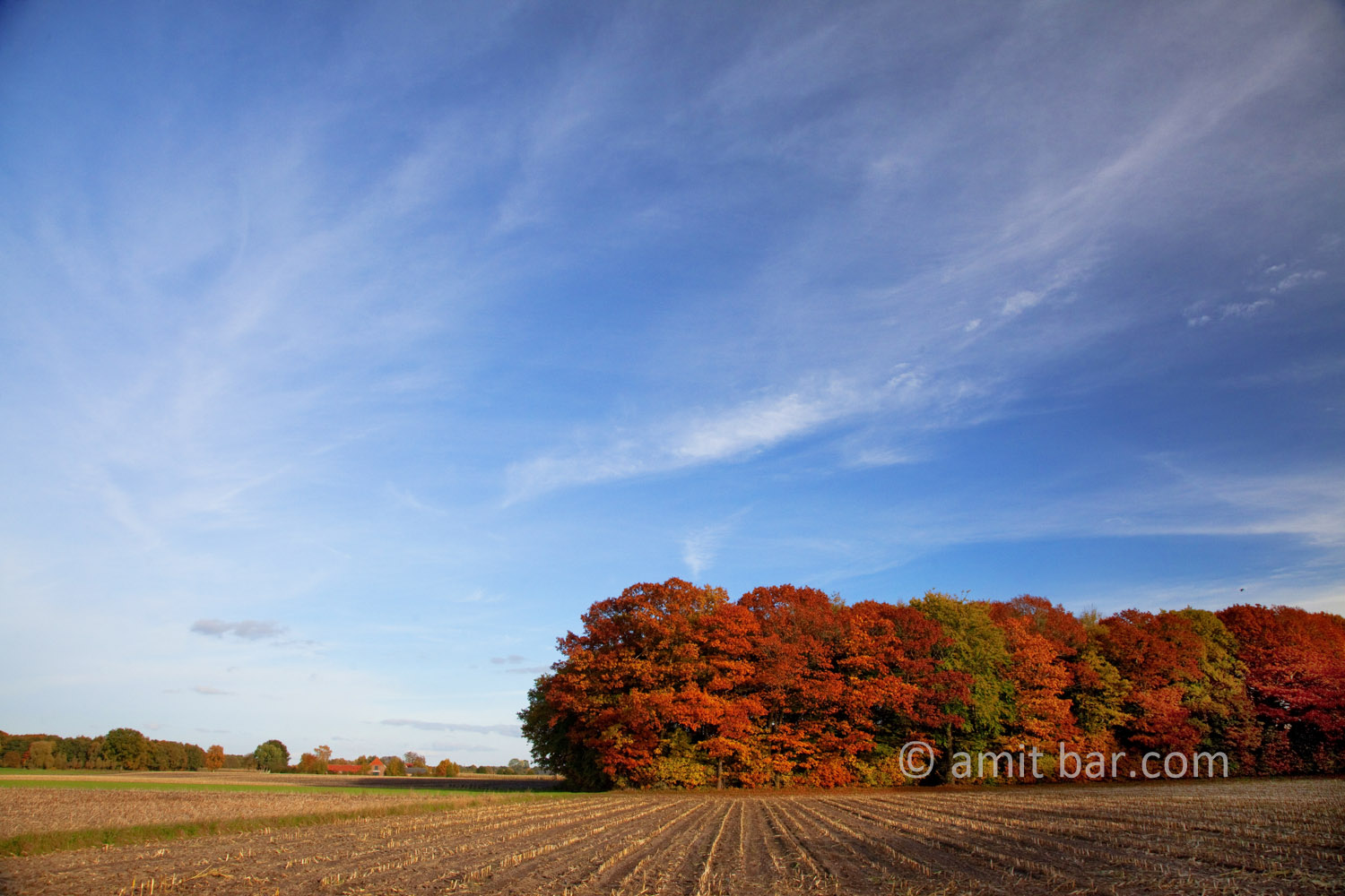 Autumn trees IV: Autumn in De Achterhoek, The Netherlands