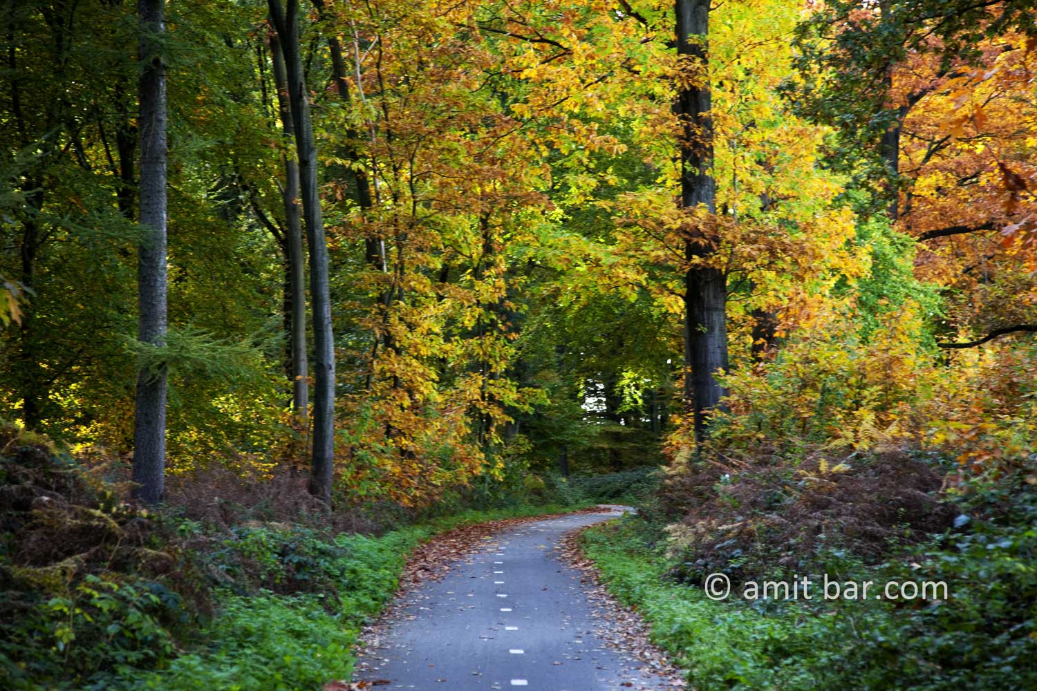Autumn trees V: Autumn in De Achterhoek, The Netherlands