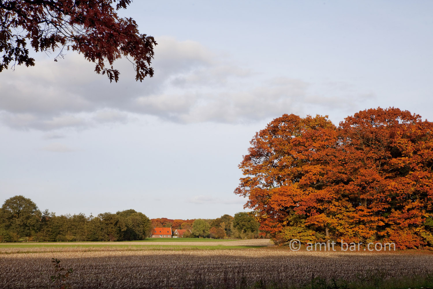 Autumn trees VI: Autumn in De Achterhoek, The Netherlands