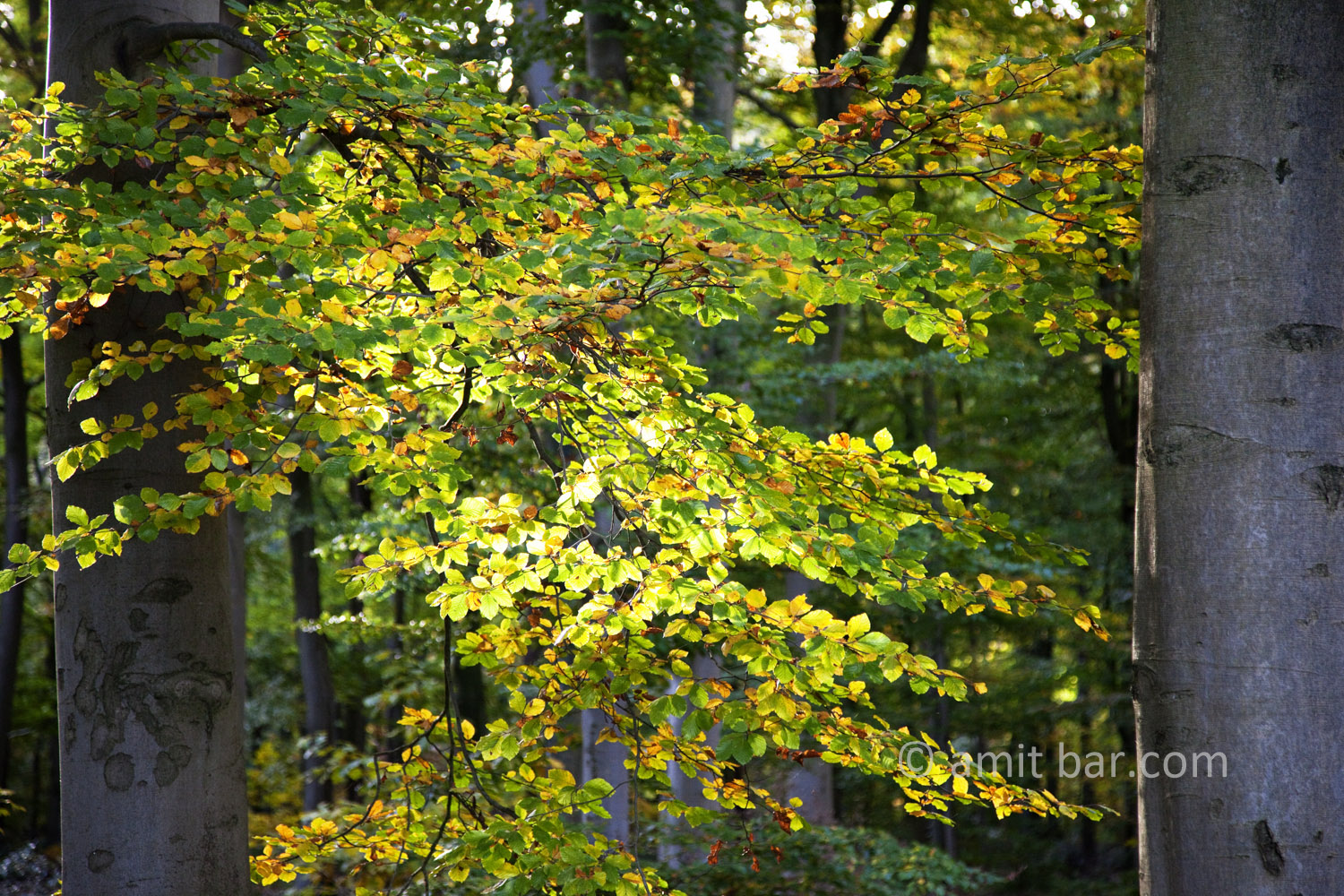 Backlighted: Forest scene