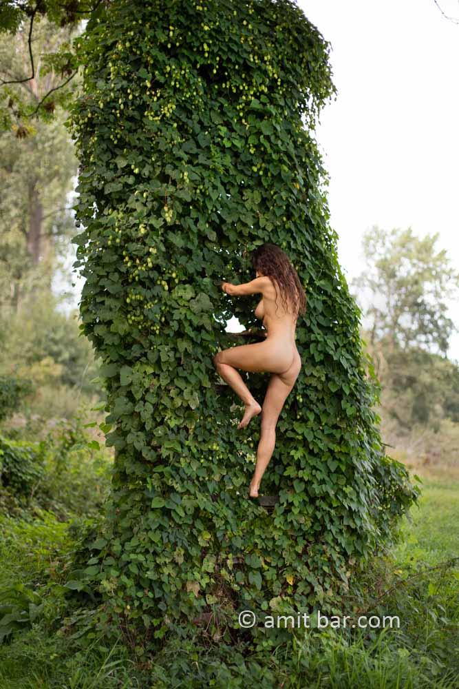 Populus logs VI: Elle is climbing on a tree