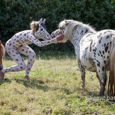 Dalmatian pony