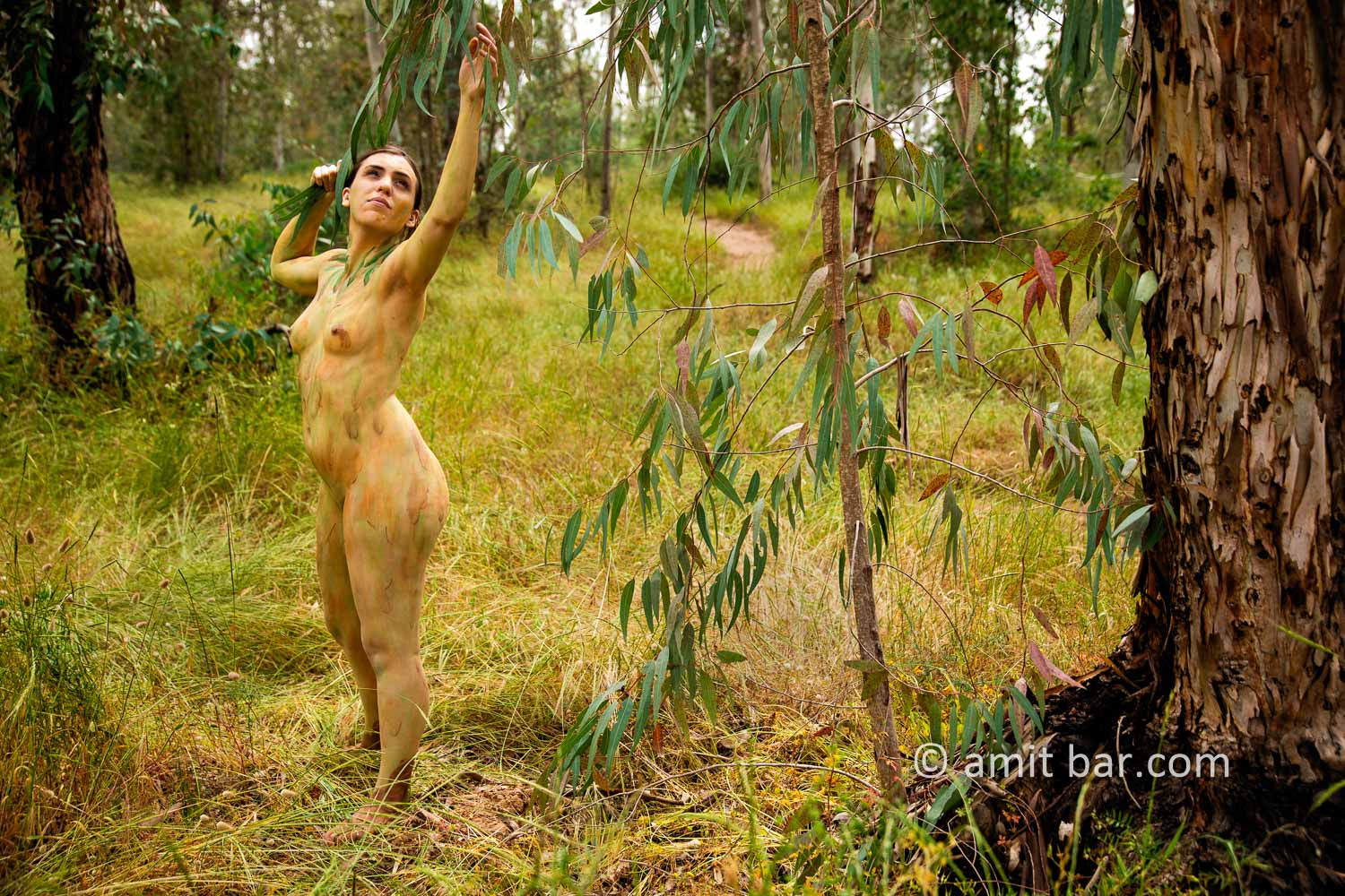Eucalyptus grove II: Body-painted model in eucalyptus grove