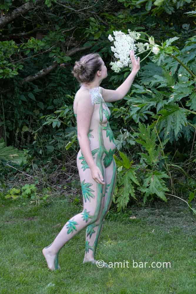 Giant hogweed I: Shelly is walking along the beautiful Giant Hogweed plant
