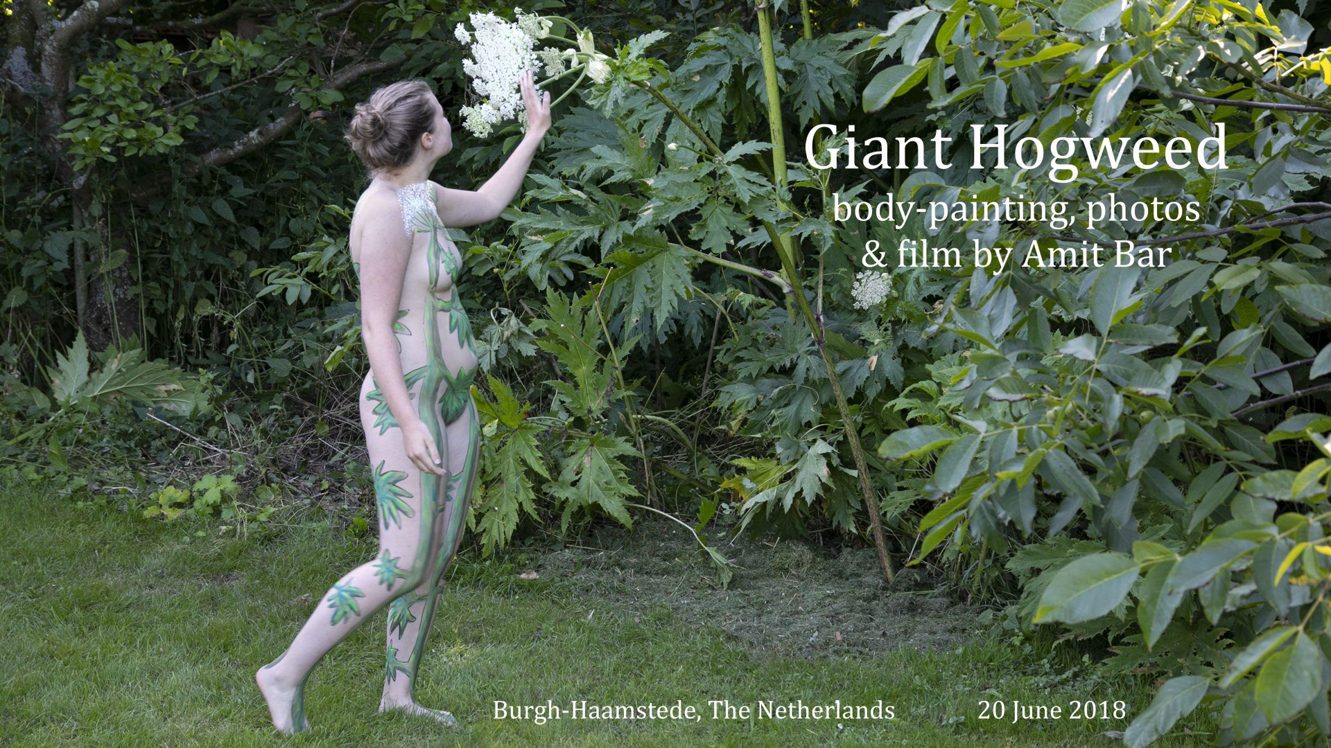 Giant Hoogweed video