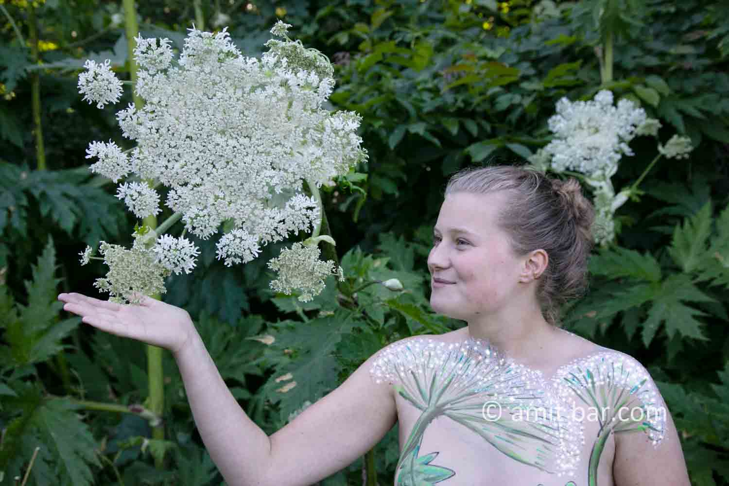 Hogweed plant portrait II: A Portrait of Shelly, who is walking along the beautiful Giant Hogweed plant