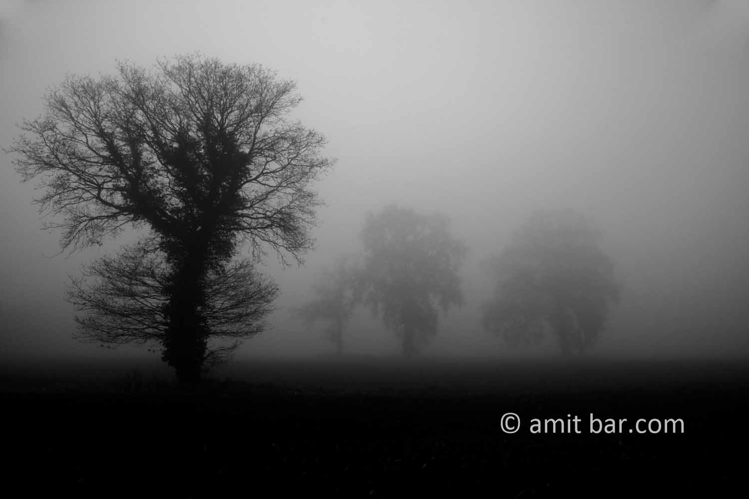 Misty field: Oak trees on a misty field at Broekstraat, Doetinchem