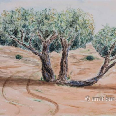 Olive trees in the valley