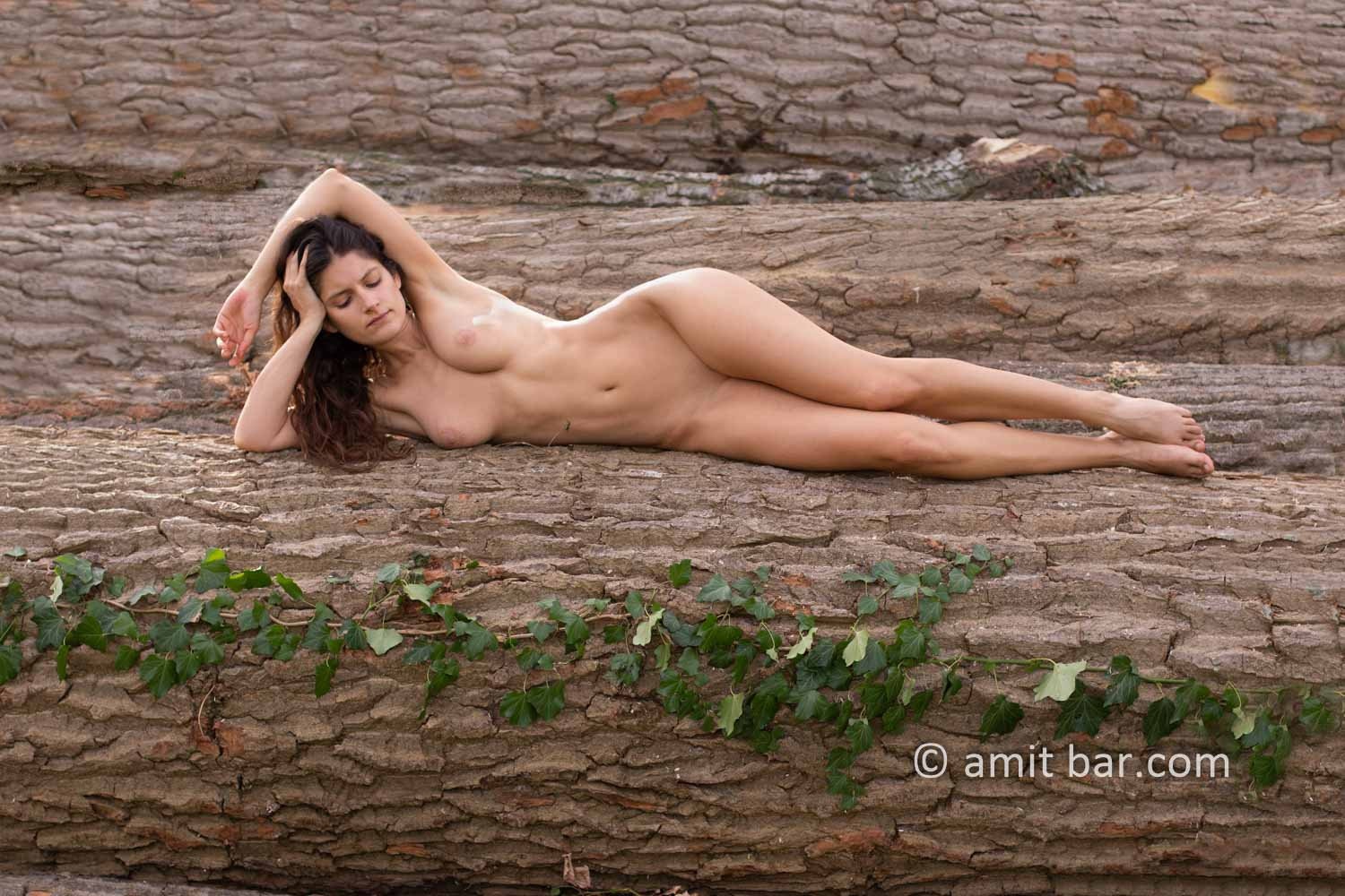 Populus logs I:: Elle is laying on populus logs