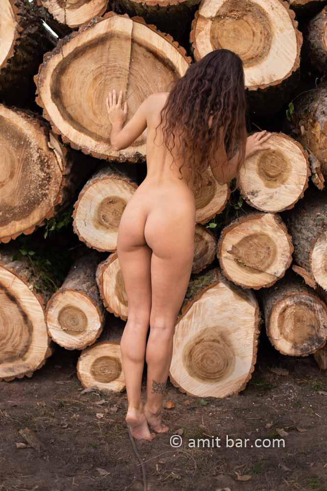Populus logs II: Elle is looking between populus logs