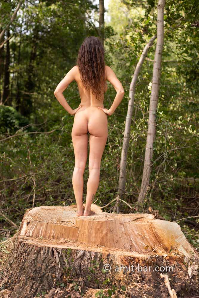 Populus logs III: Elle is standing on populus stump