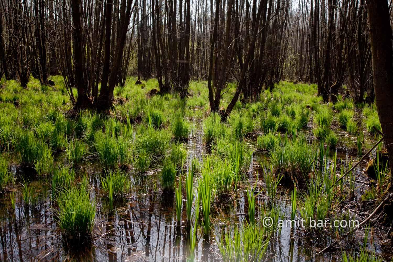 Swamp I: Swamp in Doetinchem, The Netherlands