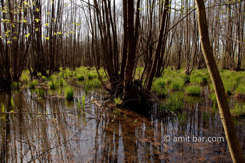 Swamp II: Swamp in Doetinchem, The Netherlands