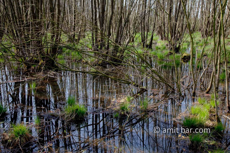 Swamp III: Swamp in Doetinchem, The Netherlands