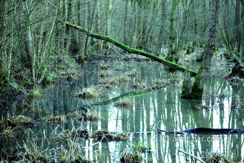 Swamp IV: Swamp with a fallen tree in De Zumpe, Doetinchem