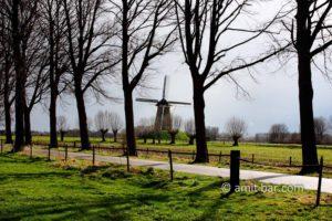 The windmill at Bronckhorst: The windmill at Bronckhorst