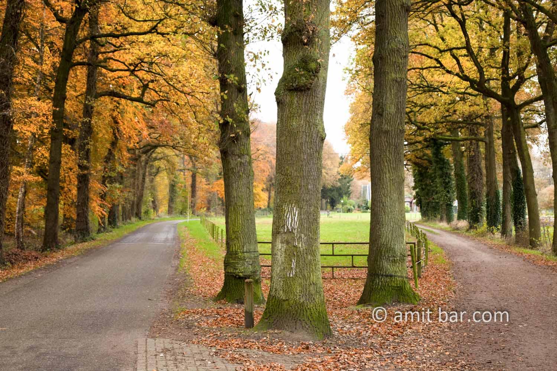 Three oaks in autumn